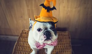 fantasia de cachorro halloween