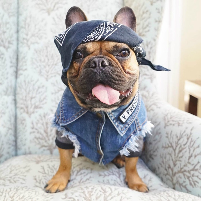 chibsthefrenchie-doghero